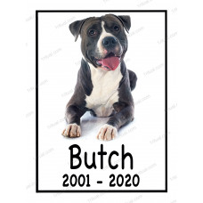Табличка с фото животного цветная, надпись